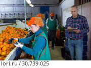 Купить «Serious owner of fruit warehouse checking work of female employees engaged in tangerines sorting», фото № 30739025, снято 15 декабря 2018 г. (c) Яков Филимонов / Фотобанк Лори