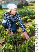 Купить «Young positive woman weeds the garden beds beets», фото № 30755549, снято 7 марта 2019 г. (c) Яков Филимонов / Фотобанк Лори