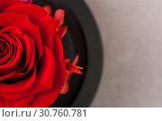 Купить «Close up of red rose», фото № 30760781, снято 22 мая 2019 г. (c) Pavel Biryukov / Фотобанк Лори