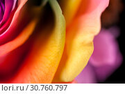 Купить «Close up macro shot of multicolored articial rose.», фото № 30760797, снято 19 мая 2019 г. (c) Pavel Biryukov / Фотобанк Лори