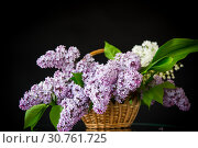 Купить «spring blooming bouquet of lilac in a basket», фото № 30761725, снято 13 мая 2019 г. (c) Peredniankina / Фотобанк Лори