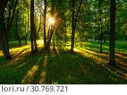 Купить «Summer park landscape - summer trees with grass on the foreground», фото № 30769721, снято 26 мая 2018 г. (c) Зезелина Марина / Фотобанк Лори
