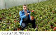 Купить «Positive male worker examining begonia seedlings while gardening in glasshouse», видеоролик № 30780885, снято 26 апреля 2019 г. (c) Яков Филимонов / Фотобанк Лори