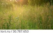 Купить «Beautiful summer landscape with grass at sunset. Russia», видеоролик № 30787653, снято 28 июня 2018 г. (c) Володина Ольга / Фотобанк Лори