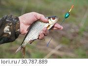 Купить «Рыбалка на поплавочную удочку, пойманная плотва в руке», эксклюзивное фото № 30787889, снято 11 мая 2019 г. (c) Dmitry29 / Фотобанк Лори