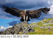 Купить «griffon against sky background», фото № 30802869, снято 17 июля 2011 г. (c) Яков Филимонов / Фотобанк Лори