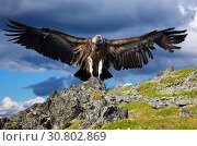 griffon against sky background. Стоковое фото, фотограф Яков Филимонов / Фотобанк Лори