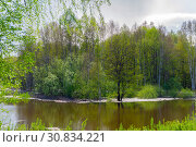 Spring grove of trees flooded during high water. Стоковое фото, фотограф Евгений Харитонов / Фотобанк Лори