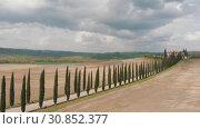 Купить «There are trees along a country road in the middle of a field. Italy, Toskana.», видеоролик № 30852377, снято 27 мая 2020 г. (c) Константин Шишкин / Фотобанк Лори