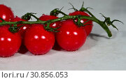 Купить «Cherry tomato falls on bunch of tomatoes», видеоролик № 30856053, снято 28 мая 2019 г. (c) Anton Eine / Фотобанк Лори