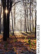 sunny autumn landscape with frost. Стоковое фото, фотограф Майя Крученкова / Фотобанк Лори
