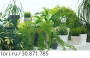 Купить «green plants at home garden», видеоролик № 30871785, снято 27 мая 2019 г. (c) Syda Productions / Фотобанк Лори