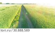 Купить «Aerial view on young boy, that rides a bicycle thru a wheat grass field on the old rural road. Sunlight and beams.», видеоролик № 30888589, снято 6 мая 2019 г. (c) Александр Маркин / Фотобанк Лори