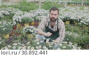 Купить «Positive man farmer working with Hydrangea plants while gardening in glasshouse», видеоролик № 30892441, снято 26 апреля 2019 г. (c) Яков Филимонов / Фотобанк Лори