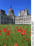 Купить «Beautiful summer view of the Hungarian Parliament building and blooming poppies in Budapest», фото № 30894081, снято 3 июня 2019 г. (c) Яна Королёва / Фотобанк Лори