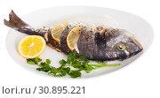 Купить «Top view of whole dorada baked with lemon served at plate with greens», фото № 30895221, снято 25 июня 2019 г. (c) Яков Филимонов / Фотобанк Лори