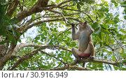 Купить «Monkey macaque in the rain forest. Monkeys in the natural environment. China, Hainan», фото № 30916949, снято 13 февраля 2019 г. (c) easy Fotostock / Фотобанк Лори