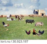 Купить «Farm Animals in a field», фото № 30923197, снято 14 октября 2019 г. (c) easy Fotostock / Фотобанк Лори