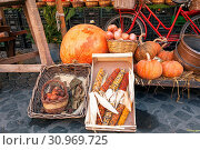 Купить «Fresh autumnal vegetables in the historical Campo de Fiori food market in Rome», фото № 30969725, снято 19 ноября 2019 г. (c) easy Fotostock / Фотобанк Лори