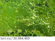 Купить «Swampy landscape», фото № 30984469, снято 18 июня 2019 г. (c) Икан Леонид / Фотобанк Лори