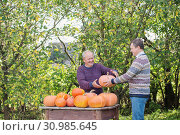elderly men with pumpinks outdoor. Стоковое фото, фотограф Майя Крученкова / Фотобанк Лори
