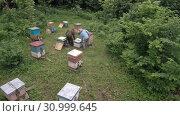 Купить «Горная пасека. Пчеловоды за работой. Вид с воздуха. Mountain apiary. Beekeepers at work. Aerial view», видеоролик № 30999645, снято 19 июня 2019 г. (c) Евгений Романов / Фотобанк Лори