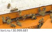 Купить «Горная пасека. Леток в улье. Mountain apiary. Notches in the hive.», видеоролик № 30999681, снято 22 июня 2019 г. (c) Евгений Романов / Фотобанк Лори