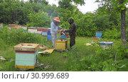 Купить «Горная пасека. Пчеловоды за работой. Mountain apiary. Beekeepers at work.», видеоролик № 30999689, снято 22 июня 2019 г. (c) Евгений Романов / Фотобанк Лори