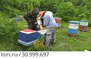 Купить «Горная пасека. Пчеловоды за работой. Mountain apiary. Beekeepers at work.», видеоролик № 30999697, снято 22 июня 2019 г. (c) Евгений Романов / Фотобанк Лори