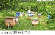 Купить «Горная пасека. Пчеловоды за работой. Ускоренное в 25 раз. Mountain apiary. Beekeepers at work. Accelerated at 25 times.», видеоролик № 30999713, снято 22 июня 2019 г. (c) Евгений Романов / Фотобанк Лори