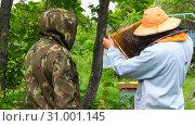 Горная пасека. Пчеловоды за работой. Mountain apiary. Beekeepers at work. Стоковое фото, фотограф Евгений Романов / Фотобанк Лори