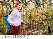 Купить «Woman working with spraying apparatus in hothouse at sunny day», фото № 31005917, снято 13 августа 2018 г. (c) Яков Филимонов / Фотобанк Лори