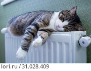 Купить «Furry striped pet cat lying on warm radiator rests and relaxes», фото № 31028409, снято 21 декабря 2017 г. (c) easy Fotostock / Фотобанк Лори