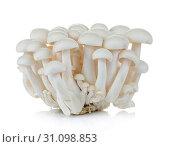 Купить «White beech mushrooms, Shimeji mushroom, Edible mushroom isolated on white background», фото № 31098853, снято 3 июня 2015 г. (c) easy Fotostock / Фотобанк Лори