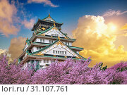 Osaka Castle and Cherry blossom at sunset in spring. Sakura seasons in Osaka, Japan. Стоковое фото, фотограф Guitar_Tawatchai / easy Fotostock / Фотобанк Лори