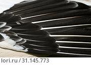 Купить «Closeup of pelican feathers. Black and pink feathers background», фото № 31145773, снято 12 мая 2018 г. (c) easy Fotostock / Фотобанк Лори