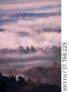 Купить «Sunrise over tropical rainforest with fog, Bukit Panorama, Sungai Lembing, Malaysia, Asia», фото № 31168229, снято 18 июля 2019 г. (c) easy Fotostock / Фотобанк Лори
