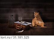 Купить «Вальяжно развалившийся кот рядом с натюрмортом из выпивки и сушеной рыбы - воблы на газетке», фото № 31181325, снято 1 июля 2019 г. (c) Ирина Кожемякина / Фотобанк Лори