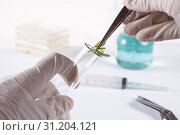 Купить «Laboratory cloning experiment on plants», фото № 31204121, снято 20 апреля 2010 г. (c) easy Fotostock / Фотобанк Лори