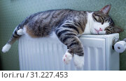 Купить «Furry striped pet cat lying on warm radiator rests and relaxes», фото № 31227453, снято 21 декабря 2017 г. (c) easy Fotostock / Фотобанк Лори