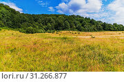 Купить «A broad pasture with thick, high grass on a glade in the middle of a thick forest on a hill», фото № 31266877, снято 26 июня 2015 г. (c) easy Fotostock / Фотобанк Лори