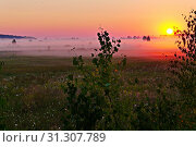 Купить «A light haze enveloping the meadow with the wild flowers growing on it and a bright yellow disk of the sun rolling over the horizon.», фото № 31307789, снято 20 августа 2013 г. (c) easy Fotostock / Фотобанк Лори