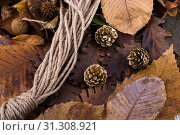 Купить «Pine cones and a rope placed on a background covered with dry leaves», фото № 31308921, снято 19 декабря 2016 г. (c) easy Fotostock / Фотобанк Лори