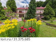 Купить «Beautiful white and red lilies growing on a green lawn in front of the house with a tiled roof and a large stone lying between two trees near its walls.», фото № 31375685, снято 30 июня 2015 г. (c) easy Fotostock / Фотобанк Лори