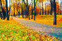 Купить «Autumn landscape - yellowed trees and fallen autumn leaves in city park alley in cloudy weather», фото № 31393669, снято 18 октября 2018 г. (c) Зезелина Марина / Фотобанк Лори