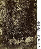 The Trail in West Gallatin Cañon, c. 1870s. William Henry Jackson (American, 1843-1942). Albumen print from wet collodion negative, image: 32.9 x 25.1... (2019 год). Редакционное фото, фотограф Liszt Collection / age Fotostock / Фотобанк Лори