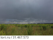 Купить «Gray sky over a green meadow. Summer landscape before a thunderstorm», фото № 31467573, снято 6 июля 2019 г. (c) Яна Королёва / Фотобанк Лори