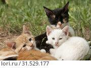 Купить «Group of puppy cats resting», фото № 31529177, снято 3 июня 2010 г. (c) easy Fotostock / Фотобанк Лори