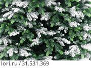 Купить «New Year and Christmas decor. Festive background with texture of decorative artificial shining snow-covered branches of Christmas trees in green», фото № 31531369, снято 27 февраля 2019 г. (c) Светлана Евграфова / Фотобанк Лори
