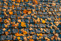 Купить «Осенний пейзаж. Autumn leaves background. Fallen orange autumn leaves on the textured stone pavement», фото № 31531449, снято 9 октября 2016 г. (c) Зезелина Марина / Фотобанк Лори